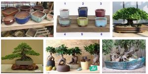vasi bonsai